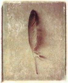 Feather   polaroid transfer on cotton paper