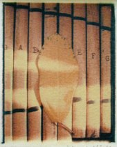 Xyleaf   polaroid transfer on cotton paper