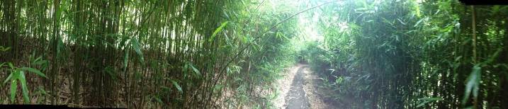 Day 1: Bamboo Forest walk - Kepaniwai Park