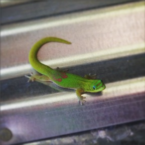 Friendly neighborhood gecko. He did not try to sell me car insurance.