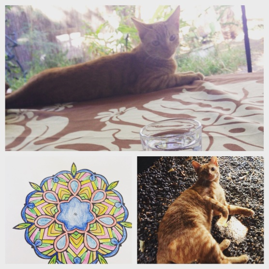 This is Sam-Sam the neighborhood kitty. She chases lizards who like to hide from her under my feet. Also I've been coloring.
